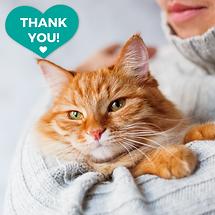 Grateful ginger cat 9.1.2020.png