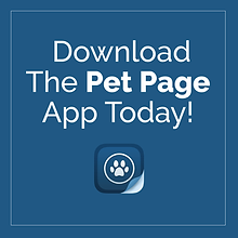 Pet Page Texting Web_FB-02.png