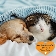 Grateful fb post cat dog grateful 9.1.pn