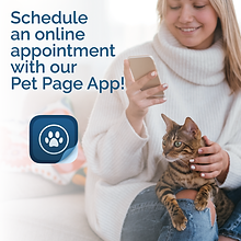 Pet Page Texting Web_FB POST-06.png
