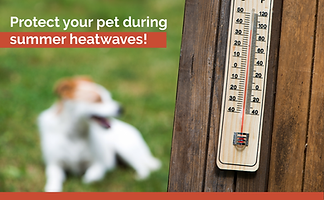 Email Banner Heatwave Heat Stroke Toolkit -09.png
