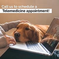 Telemedicine_Social Post Canine.png