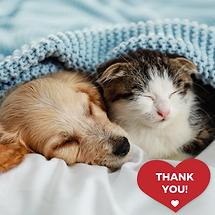 Grateful cat dog fb post 9.1.png