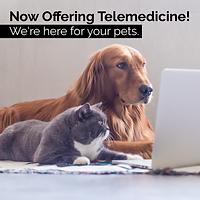 Telemedicine_Social Post 1.png