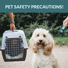 Pet Safety Curbside Facebook cat and dog