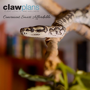 Reptile CLAW_FB POST-04.png