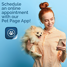 Pet Page Texting Web_FB POST-03.png