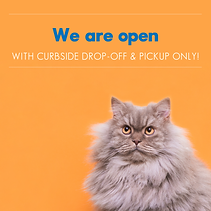 Curb COVID-19 Social Kit V2_Feline only.