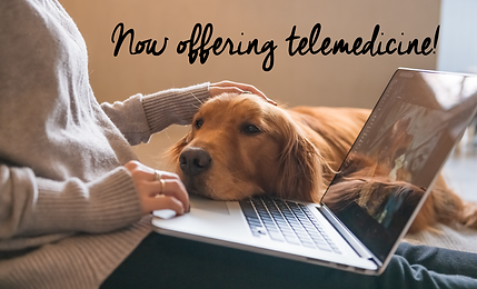 Telemedicine Services_Email Banner Canin