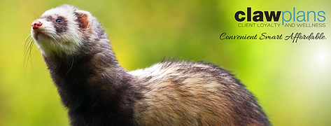 Ferret CLAW_FB COVER.png
