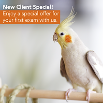 New Client Offer Social-02.png