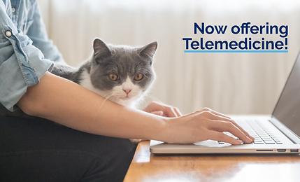 Telemedicine Services_Email Banner Felin