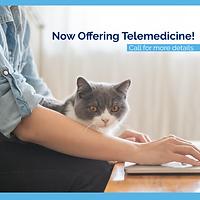 Telemedicine_Social Post Feline.png