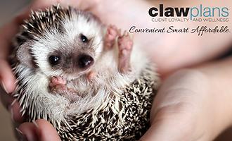 Hedgehog Sugarglider CLAW_ALLY.png
