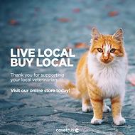 Local_Cat_Evergreen_FBPost.png