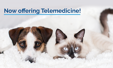 Telemedicine Services_Email Banner 2.png