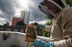 City beekeepers, London