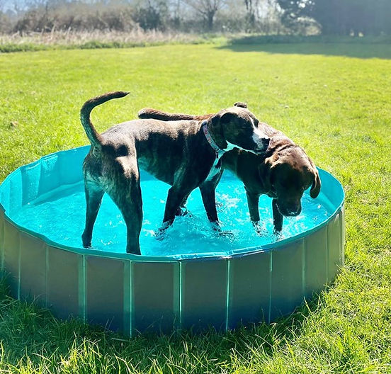 Dogs in pool.jpg