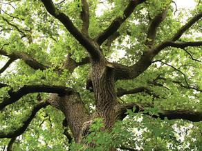 Branches of Faith