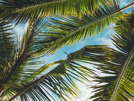 Be a Palm Tree