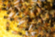 honey-bees-326336_1920.jpg