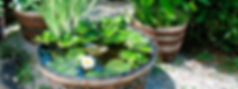 Giardini_acquatici_VIVAIBAMBU_vivaibambu