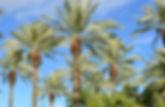 palme-dattero-770x470.jpg