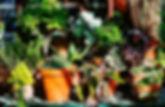 piante-in-vaso-990x470-c.jpg