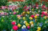 Stupendi-fiori-sfondi-per-Desktop-4.jpg