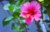 PX_ibisco.jpg
