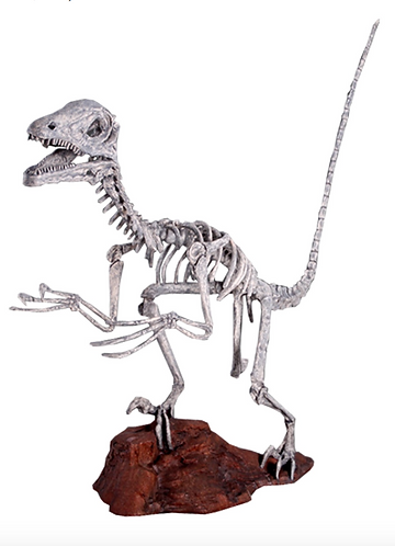 Deinonychus Skeleton - Roman Stone Finish