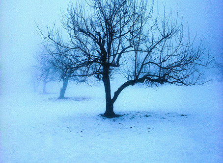 When You Feel Dead Inside: Parable of the Sapling and the Orchard Keeper
