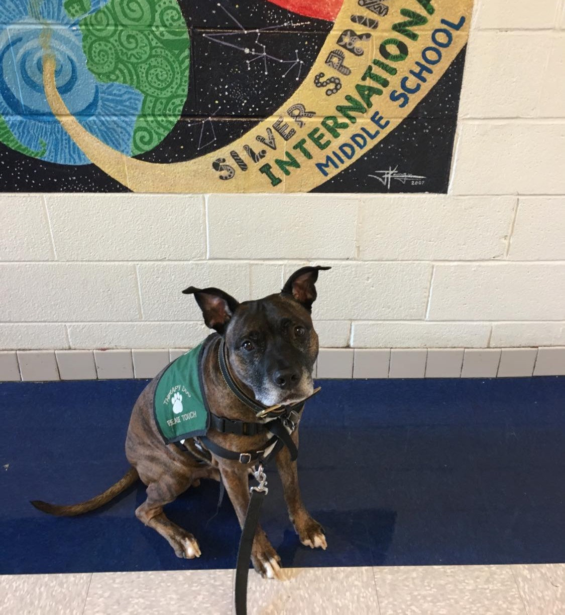 Path of A Therapy Dog