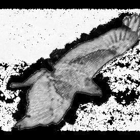Falcon Sketch.png