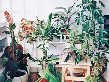 Para quem acha que é um serial killer de plantas: como conseguir ter um jardim em casa