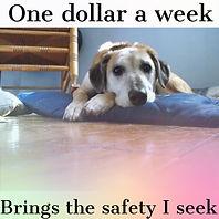 Dollar a week.jpg
