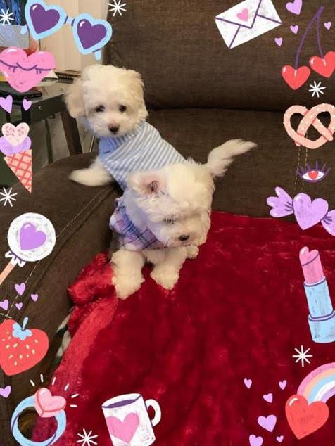 Doggie Dress3.jpg