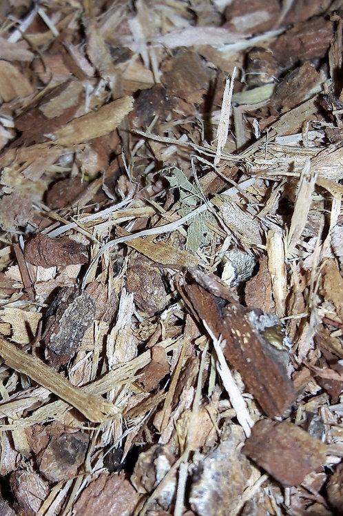 Oak Bark 25g