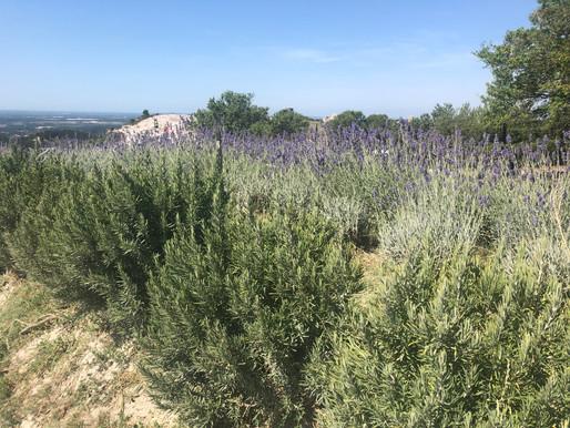 De la lavende, un château, du Van Gogh