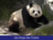 San-Diego-Zoo-web.jpg