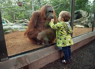San-Diego-Zoo-Vacation-Package.jpg