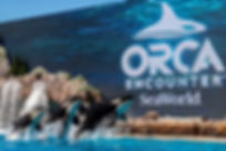 SeaWorld's Orca Encounter