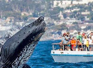 Newport-Landing- Whale-Watching-&- Dolphin-Cruises.jpg