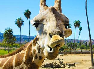 San-Diego-Safari-Park-Vacation-package.jpeg