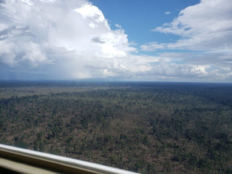 Desmatamento da Amazônia é 7 vezes a capital de SP