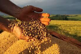 Macron sugere Europa plantar soja para preservar Amazônia