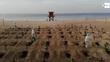 Brasil chega a 250 mil mortes com média maior que 1ª onda