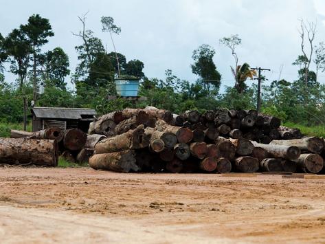 TCU: esvaziamento do Ibama compromete Amazônia