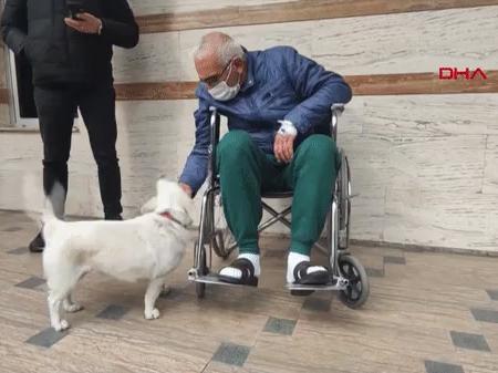 Cachorrinha espera pelo dono 6 dias na porta do hospital