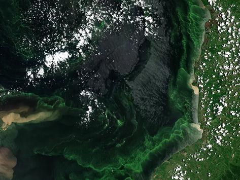 Fatal: maior lago da América do Sul está ficando verde